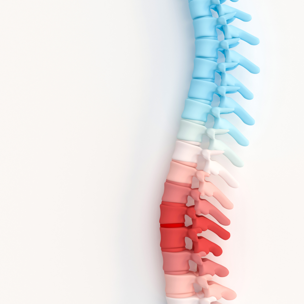 Dermatome Chart 101: Understanding Spinal Nerves and Locations - Pain Management & Injury Relief